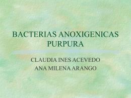Bacterias anoxigénicas púrpura
