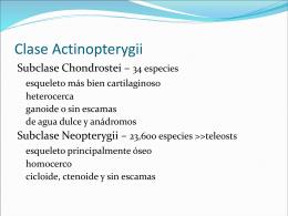 CLASE 11. BIOSISTEMATICA. PECES.4