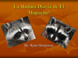 La Rutina Diaria de El Mapache!