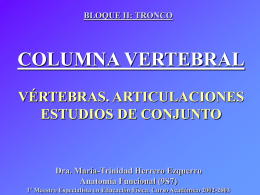 Columna vertebral: vértebras, articulaciones. Estudios de conjunto