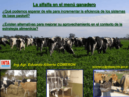 Alfalfa - TodoAgro
