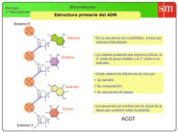 23-Estructura primaria del ADN