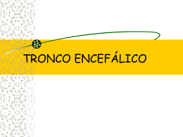 tronco-encefalico1.