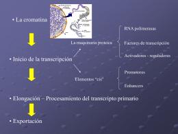 Transcripción III eucariotas