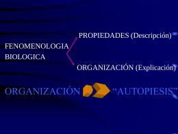 sistema autopoietico