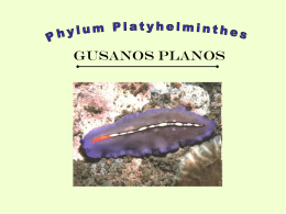Platyhelminthes