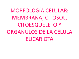 orgánulos célula 2º bach.