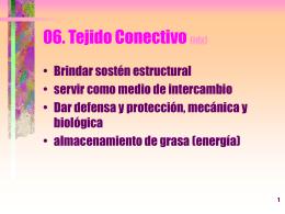 06. Tejido Conectivo