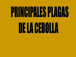 Diapositiva 1 - BibliotecaDeaMag