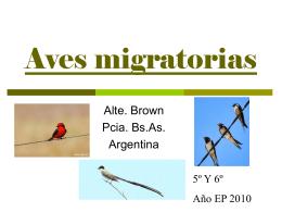 Aves migratorias_final