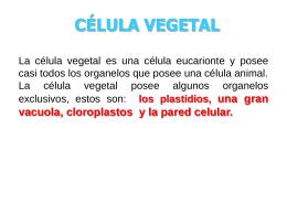 la_celula_vegetal