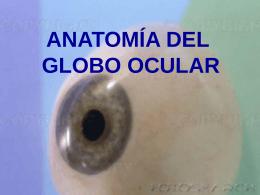 ANATOMÍA DEL GLOBO OCULAR Imágenes del globo ocular