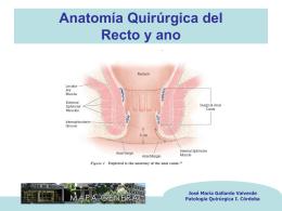 Anatomía Quirúrgica del Recto y ano