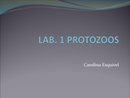 present protozoa