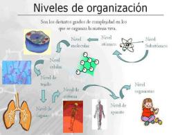 NIVELES DE ORGANIZACION.