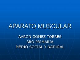 APARATO_MUSCULAR_AARON