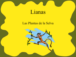Lianas - QuestGarden.com