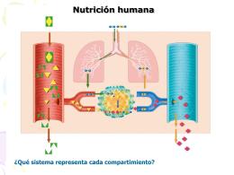 sistemas en la nutricion 7 2009