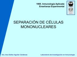 SEPARACIÓN DE CÉLULAS MONONUCLEARES POR