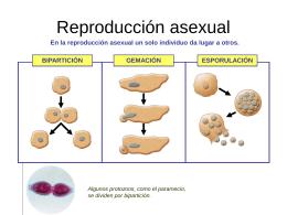 Reproducción asexual - cienciasnaturalesgtb