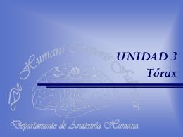 UNIDAD 2 Tórax