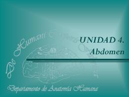 Abdomen. Circulación de la Aorta Abdominal