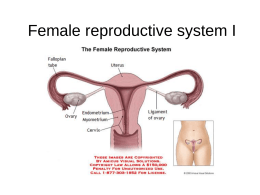 Aparato reproductor femenino (IV)