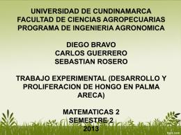 HONGO EN PALMA ARECA) (4186112)