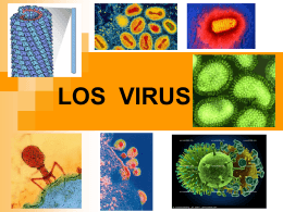 VIRUS - Microbiología 105