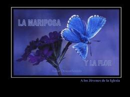 mariposa - gabrielzelaya