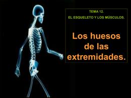3. Los huesos de las extremidades