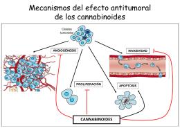 PPT - Sociedad Española de Investigación sobre Cannabinoides