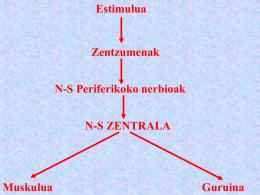 nerbio sistema