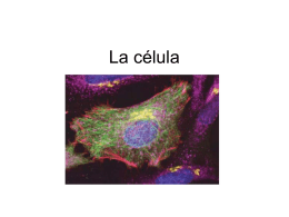 La célula - campvs.cl
