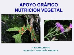 APOYO GRÁFICO NUTRICIÓN VEGETAL