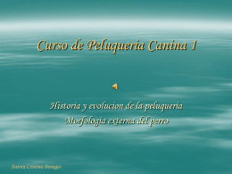 Curso de Peluqueria Canina1