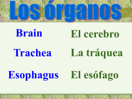 Los órganos