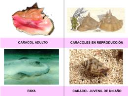 3.1.- Juego de fichas del ciclo de vida del Caracol rosa.