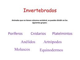 Invertebrados - Unidad