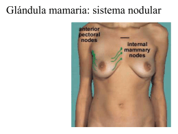 Glándula mamaria: sistema nodular