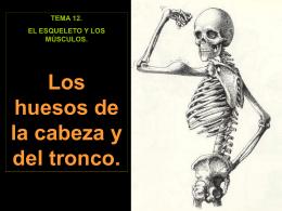 2. Los huesos de la cabeza y el tronco