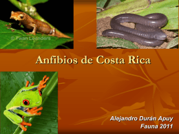Familia Caeciliidae