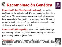 Recombinación - Genética Molecular