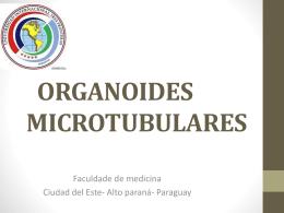ORGANOIDES MICROTUBULARES