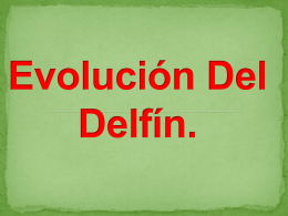 Evolución Del Delfín.