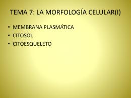 TEMA 6: LA MORFOLOGÍA CELULAR