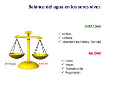 Balance del agua en los seres vivos ENTRADAS SALIDAS