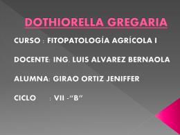 xx.- DOTHIORELLA GREGARIA