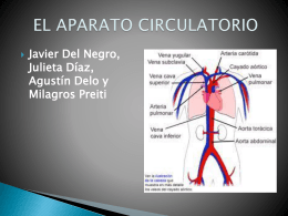 Sistema circulatorio - Nuestra Señora del Refugio
