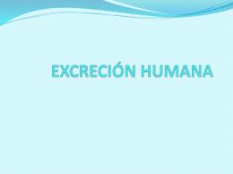 EXCRECIÓN HUMANA.